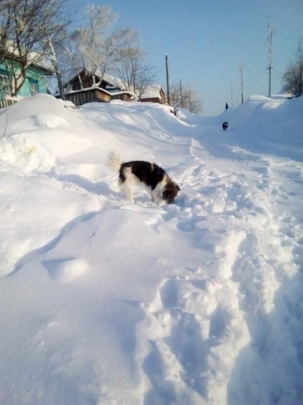 Рабочие бросили этого преданного пса на стройке пес, пес-охранник, собака, стройка