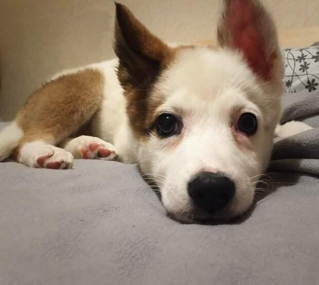 щенок на кровати