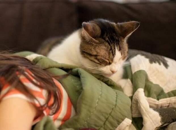 как лечат коты