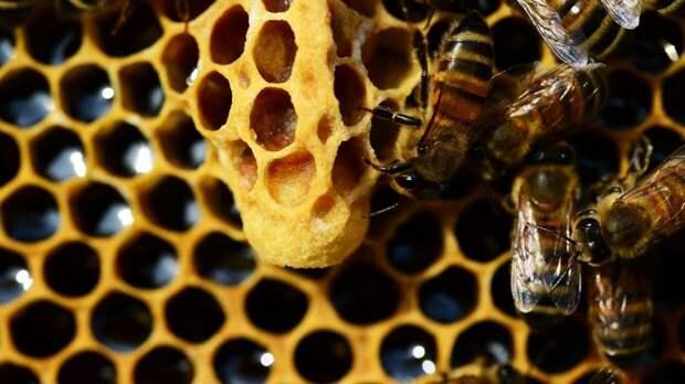 Жители Западной Африки начали добывать мед еще 3,5 тысячи лет назад