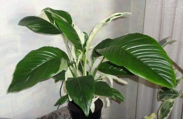 отличное растение для спальни