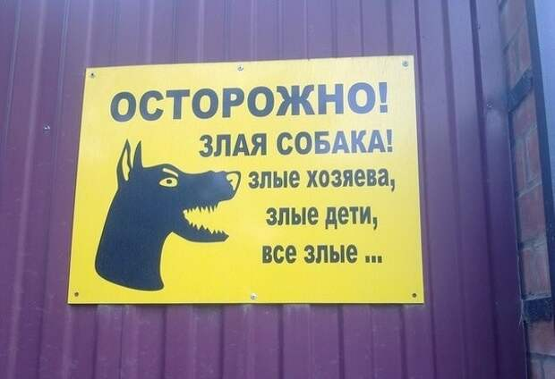 Когда пес весь в хозяев животные, прикол