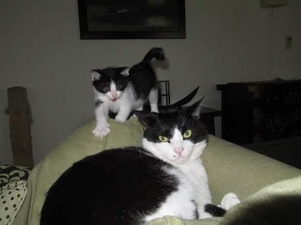 Опасные котики