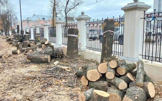 Экологи: Деревья в Верхнем городском саду Рязани погибли из-за «варварской» реконструкции парка