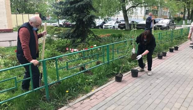 В поселке Дубровицы высадили кустарники в рамках работ по благоустройству