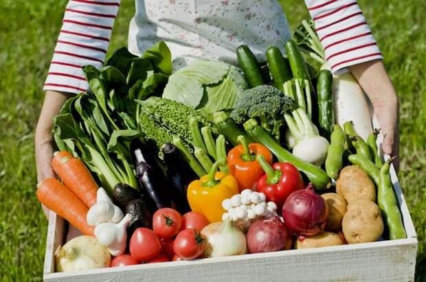 Советы для жадных огородников: как собрать больше урожая