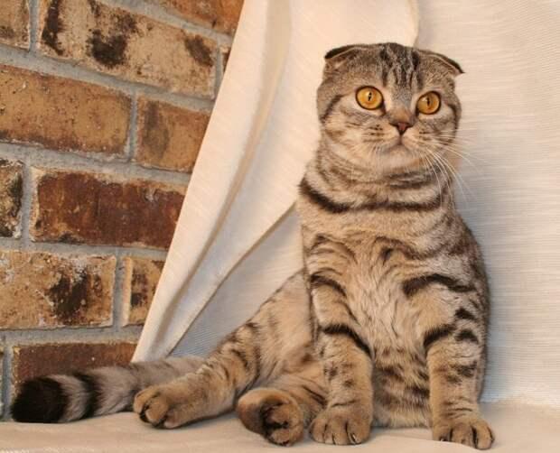 Как кошка подставила меня перед женой истории, факты, юмор