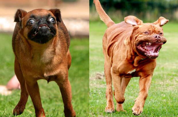 Фотограф снял бегущих собак, иэто очень смешно