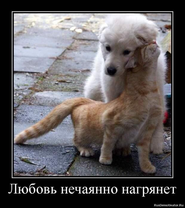 Формула любви: увлечение...влечение...лечение...
