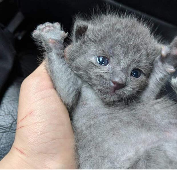 Котенку было несколько часов от роду… Его выкинули на улицу, но в очень хорошее место!