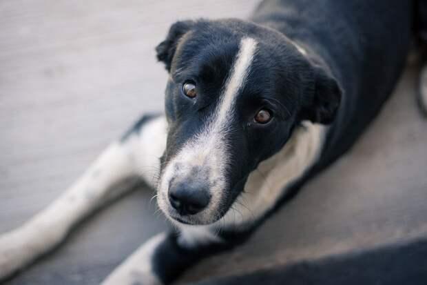 Москвичка пристроила бездомного пса из поселка Удмуртии в Бельгию