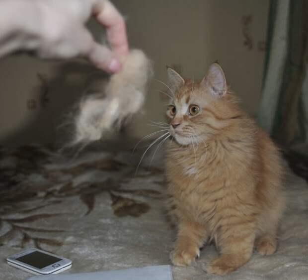 Мастерица Юлия Галицына расчесала своего питомца, и решила использовать его шерсть творчески! валяние, валяние из шерсти, животные, кот, коты, питомцы, своими руками, фото