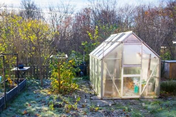 Осенняя уборка в теплице: пошаговая инструкция