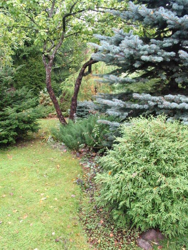 В таком саду естественно сочетаются аборигенные деревья и культурная растительность