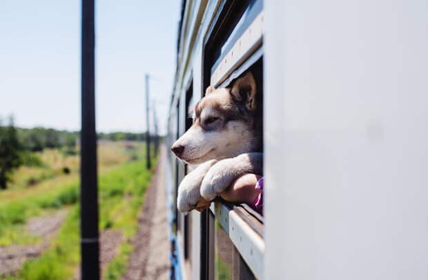 Поездка с собакой: советы опытных путешественников