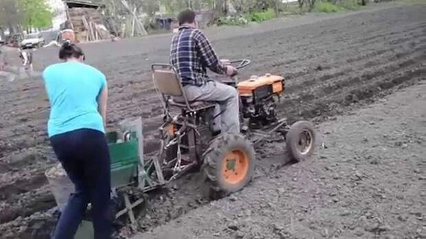 Насколько реально вырастить озимую картошку? Личный опыт