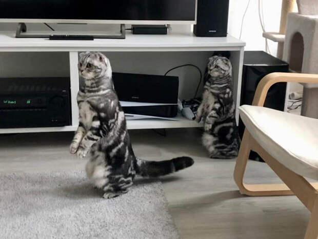 15 снимков, которые доказывают, что коты стоят не только на четырех лапах