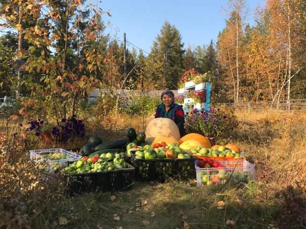 Живу в Якутии, выращиваю тыквы