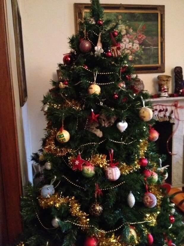 10. Еще один шарик на елку животные, новый год, праздник к нам приходит, разрушительная сила, рождество, собаки и кошки, юмор