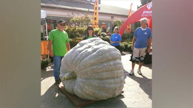 Фермеры вырастили гигантский кабачок в 981 кг и побили мировой рекорд