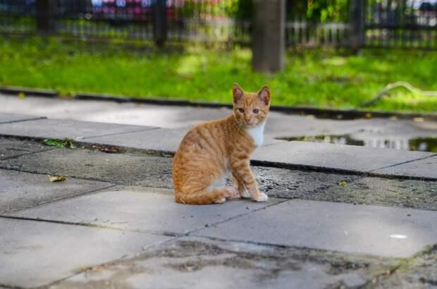 Ручные котята выживают одни...Любящее сердце, спаси!
