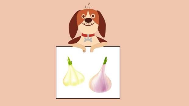 Собака, лук и чеснок