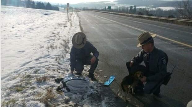 Водитель грузовика спас двух биглей, которых выкинули из машины на ходу Добрые дела, животные, истории, история спасения, помощь животным, собака, собаки, спасение животных