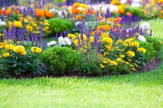 Расположенные на газоне одиночные клумбы способны преобразить атмосферу сада