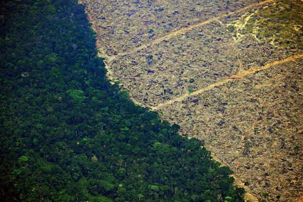 Каждые 6 секунд Земля теряет часть тропических лесов размером с футбольное поле