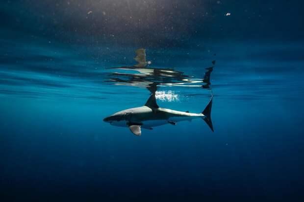 Подводный мир 26