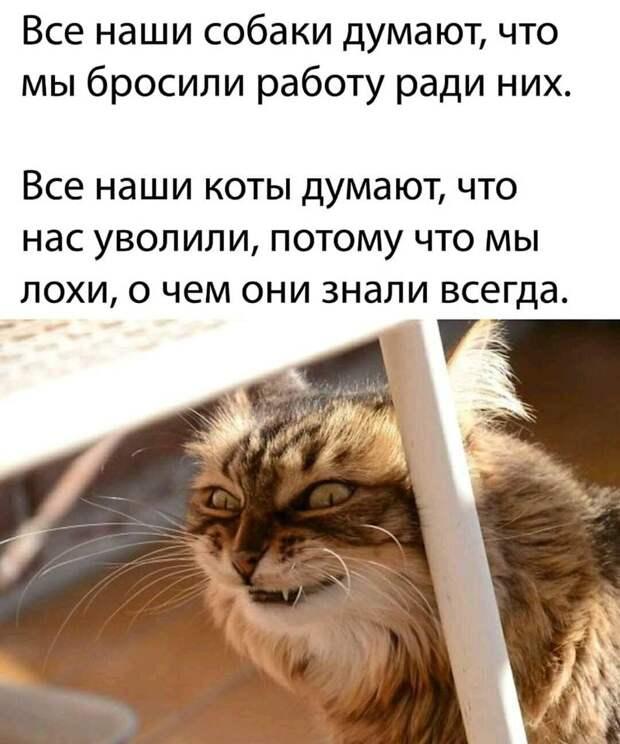 Байки про котов 6