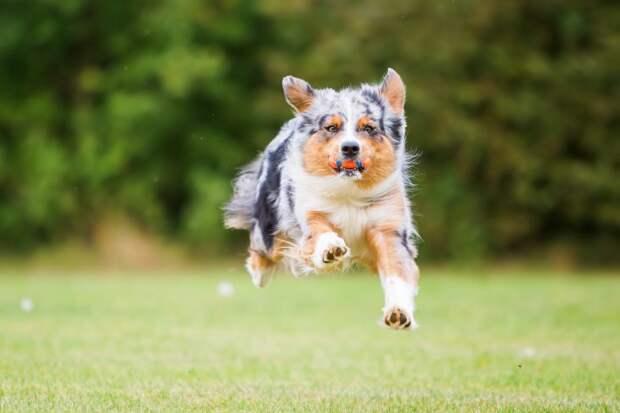 Когда твой пёс — самый настоящий рэкетир
