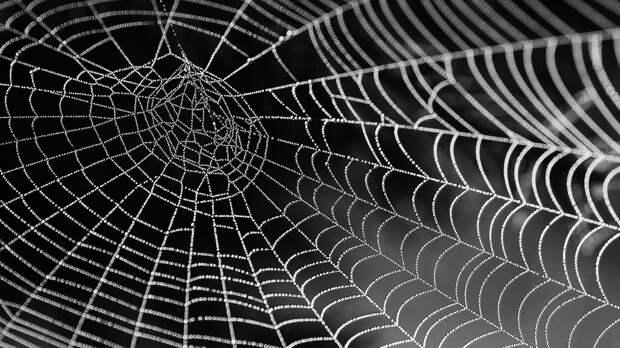 Ученые из США смогли преобразовать паутину в музыку