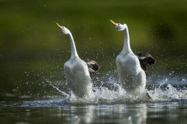 Животные, которые умеют ходить по воде