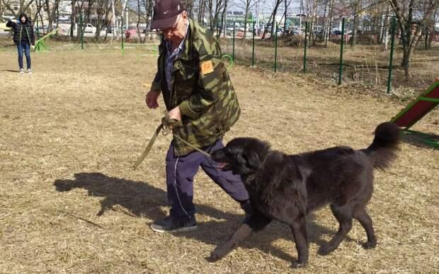 В Рязани прошла выставка беспородных собак