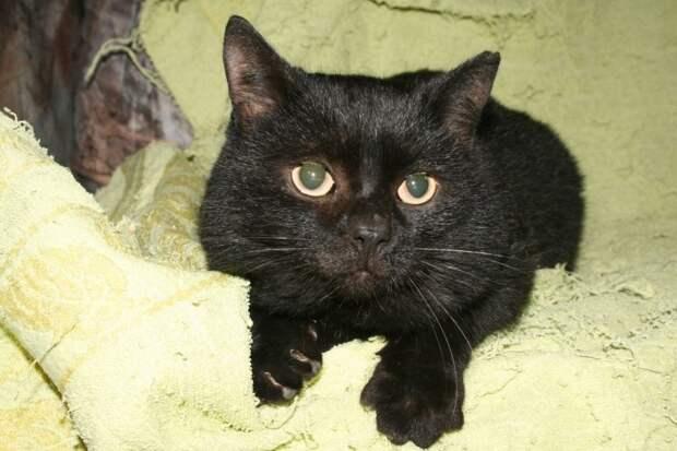 Черный растерянный кот увязывался за каждым прохожим кот, кошка, черная кошка, черный кот