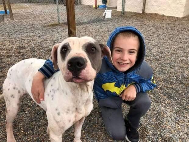 7-летний мальчик стал ребенком года за спасение 1300 собак