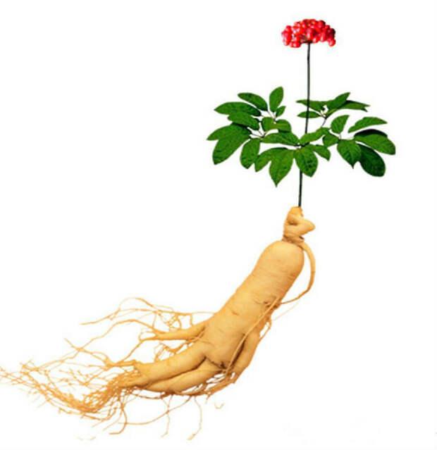 Лучшие растительные адаптогены: Топ-15