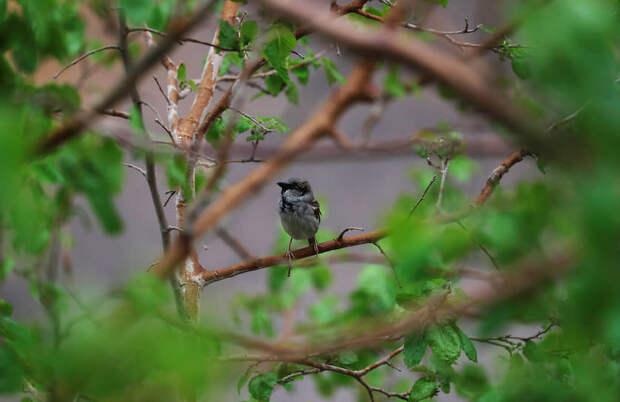 Каир, Египет. Птица на ветке