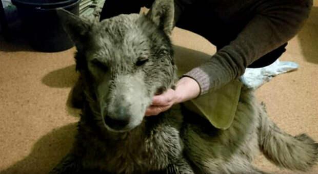 Он год боролся за жизнь после избиения за волчью внешность