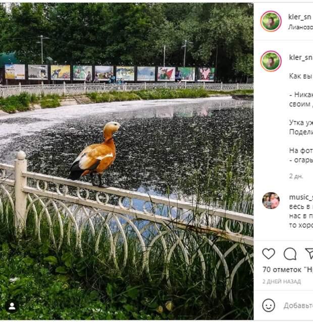 Фотокадр: пруд в Лианозовском парке покрылся «снегом»