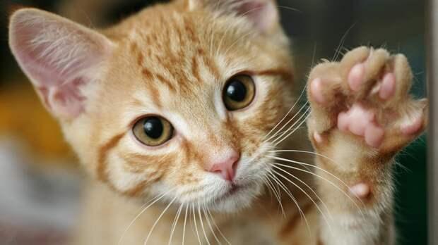 Врач объяснил несовместимость беременных с кошками