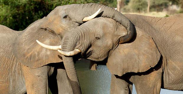 Ученые придумали, как изучать язык животных