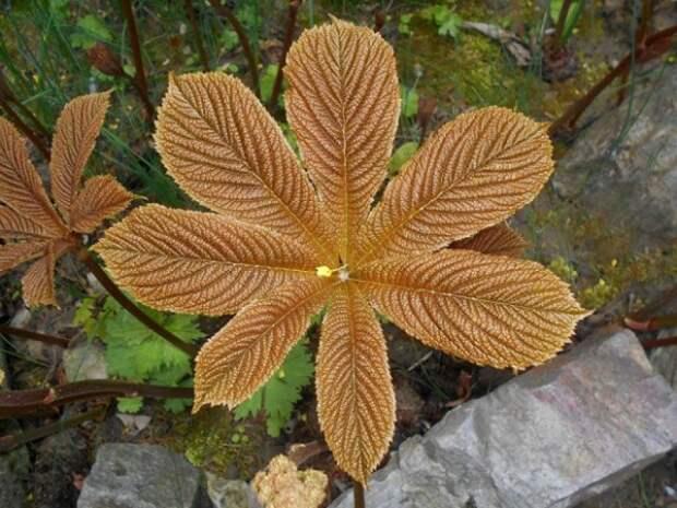 декоративно лиственные уличные растения