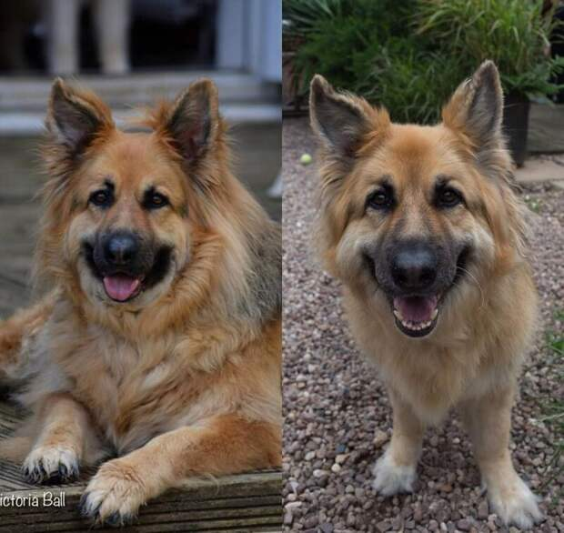 17. Минус 20 кг и всё такая же широкая собачья улыбка диета, до и после, домашний питомец, животные, похудела, собака, фигура