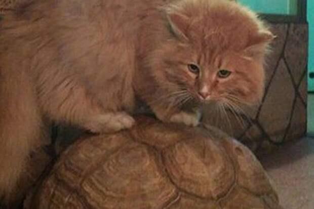 Расплата за славу: кота Батона, который предотвратил побег черепах, украли из зоогалерии Иркутска. Фото: архив зоогалереи Иркутска