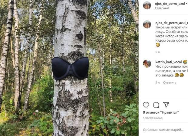 В лесу в Северном замечена берёза в нижнем белье