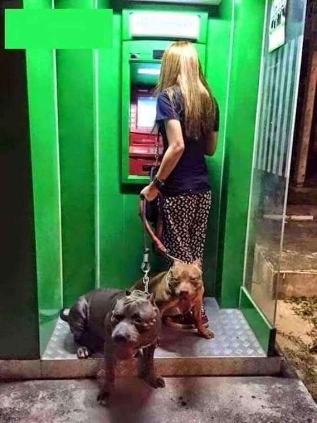 С таким конвоем у банкомата вы в полной безопасности! Охранники, банкомат, безопасность, деньги, друзья человека, животные, охрана, собаки