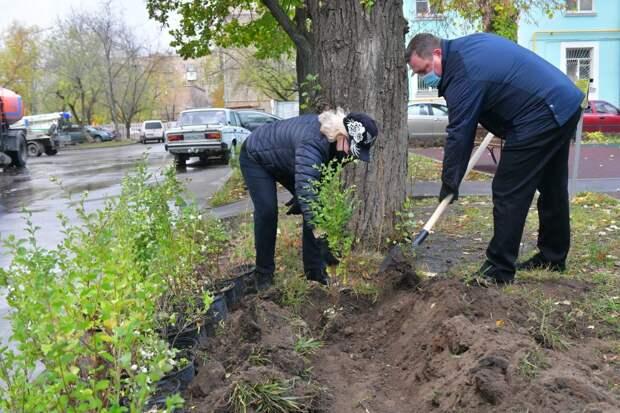 Саженцы для посадок выделил Департамент природопользования / Фото: Денис Афанасьев