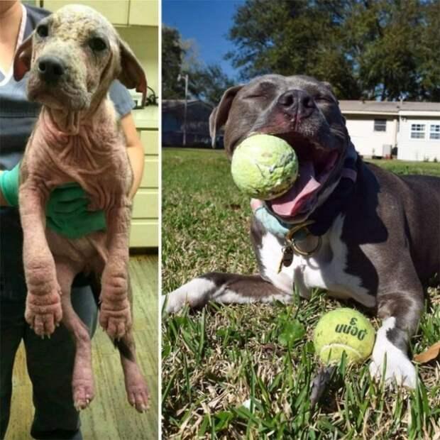 25 трогательных фото-историй, как брошенные собаки нашли новых любящих хозяев